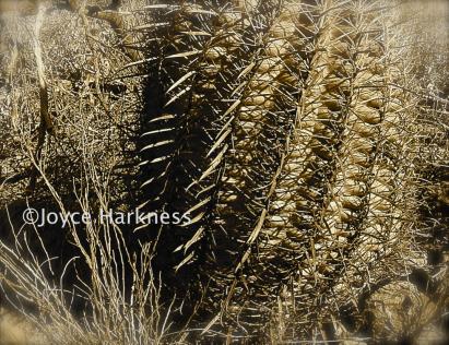 Desert cactus w copyright